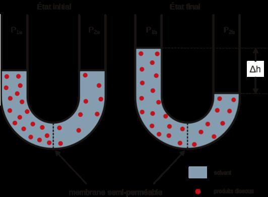 Explications osmose inverse