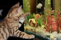 Osmoseur pour aquarium